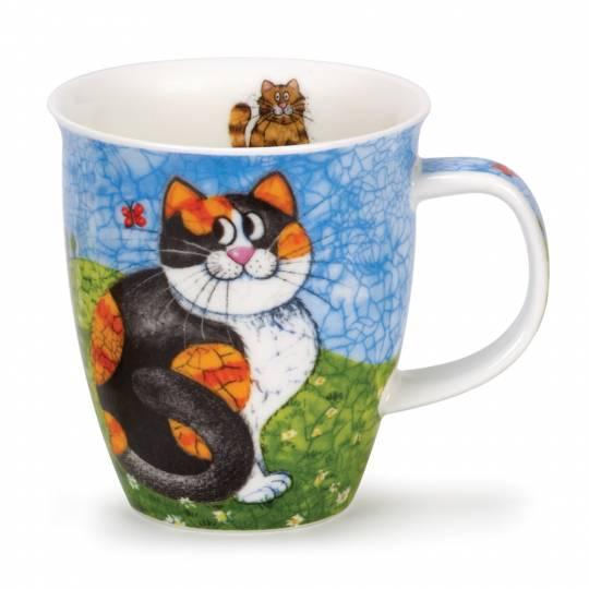 Nevis - Happy Cats Tortoieshell