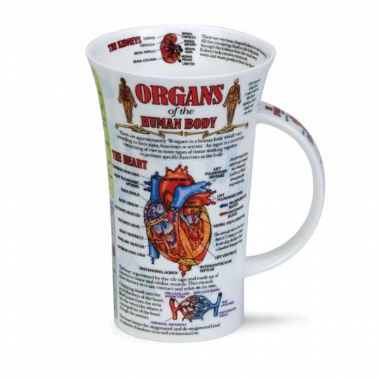 Glencoe - Organs of the Human Body